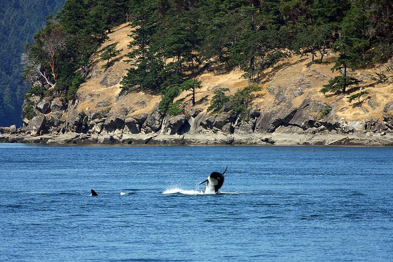 WhaleWatching0713(orig)_0091