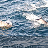 two_dolphins_MG_8419