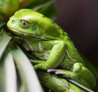 Frog_ 3245