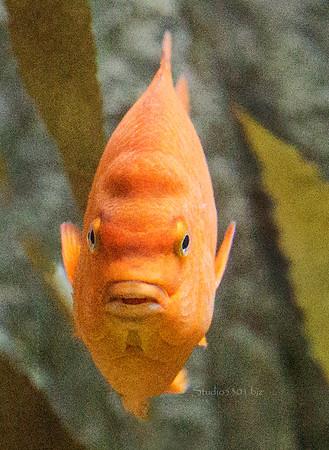 orange fish face 9830