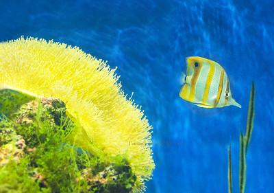 fish & yellow coral  Wildlife World 0137