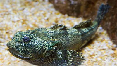 ugly fish 9832