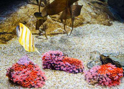 yellow stripe Fish & coral 128