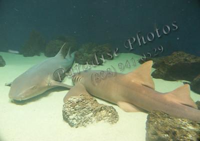 sharks 0404