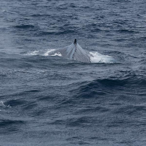Week-end baleines
