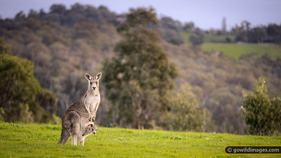 Mt Lofty residents