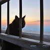 Marty watching sunset from the Observation Deck