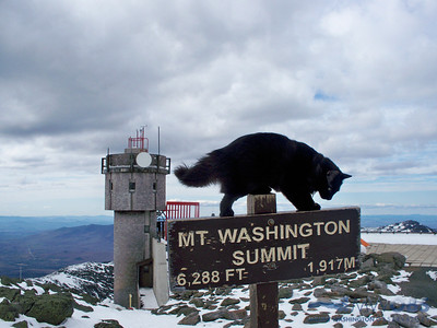 Marty On The Summit Sign