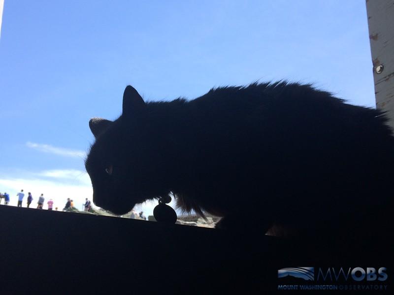 Godzilla Kitty