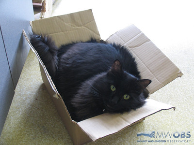 Marty In A Box