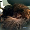 Marty sleeping on a Chair in the Wx Room