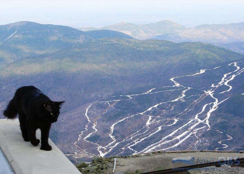 Marty And Wildcat Resort