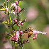 Meadowlark Gardens 11 Sept 2017-7350