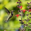 Meadowlark Gardens 11 Sept 2017-7356