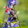 Meadowlark Gardens 11 Sept 2017-7399