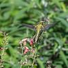 Meadowlark Gardens 11 Sept 2017-7306