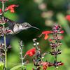 Meadowlark Gardens 11 Sept 2017-7311