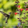 Meadowlark Gardens 11 Sept 2017-7355