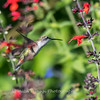 Meadowlark Gardens 11 Sept 2017-7323