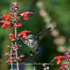 Meadowlark Gardens 11 Sept 2017-7313