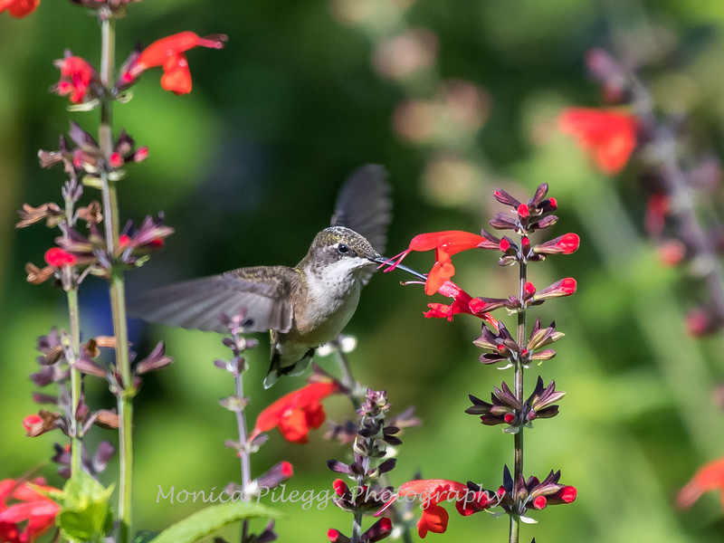 Meadowlark Gardens 11 Sept 2017-7310