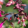 Meadowlark Gardens 11 Sept 2017-7406