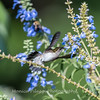 Meadowlark Gardens 11 Sept 2017-7335