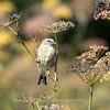 Meadowlark Gardens 11 Sept 2017-7429