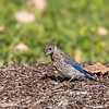 Meadowlark Gardens 11 Sept 2017-7398