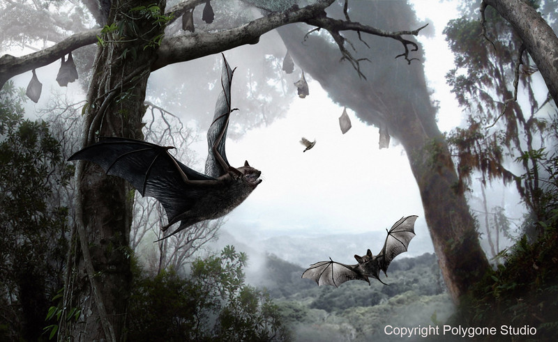 This is another image done by Polygone for the Canadian Museum of Nature.<br /> Marc Lalumière produced the sketch, as he did all the sketches for this project.<br /> Here, the fun part of the work was to draw this prehistoric bat who was placed in the shady forest against a very bright, misty background. The hair and the skin of the wings are still well detailed.