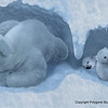A Polar Bear mother in her cave with her cubs. <br /> I produced this image for Weldon Owen through a contract brought in by Polygone's agent Contact Jupiter.
