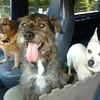 Jake, Gus and Morgan