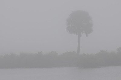 Merritt Island National Wildlife Refuge in the fog.