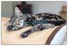 Lundi 20 octobre 2014: né le 21 juillet 2014, le jeune chaton arrivé à la maison la veille prend ses quartiers. Il éternue beaucoup et a les yeux qui coulent (conjonctivite?) et semble même avoir des puces... Il ira chez le vétérinaire le soir même.