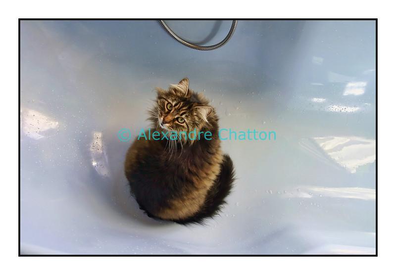 Smarties dans la baignoire en mars 2006.
