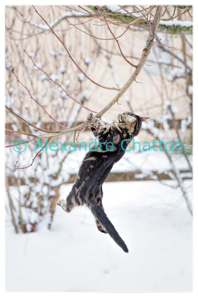 Speedy dans la neige