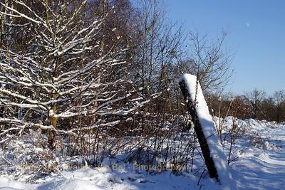 Sneeuwwandeling_20090106_Itegem_CRW_12063_WVB_1200px