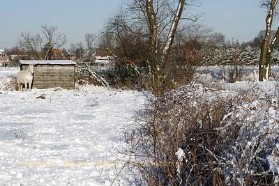 Sneeuwwandeling_20090106_Itegem_CRW_12078_WVB_1200px