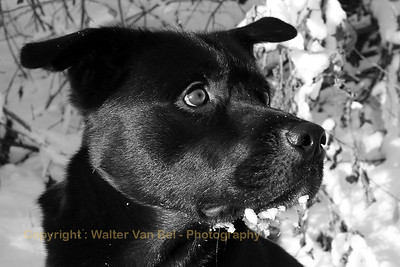 Bosco in B&W...