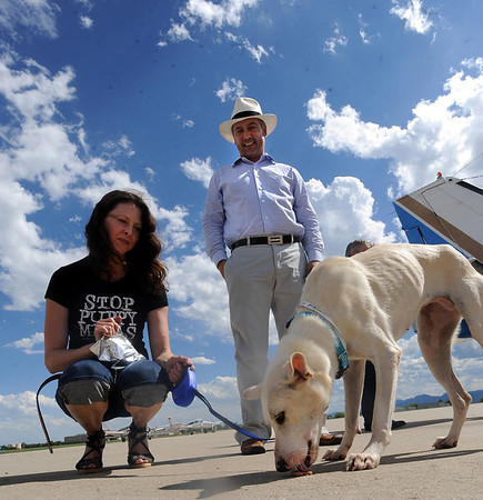 "Dana and Peter  Carey of Longmont meet their new dog, Alvina, for the first time as she got off a plane from Mexico.<br /> The International Fund for Animal Welfare (IFAW) partnered with the Longmont Humane Society to rescue 9 dogs from the Cozumel, Mexico city dump ang bring them to Longmont. For a video  and photo gallery of the dogs' arrival, go to  <a href=""http://www.dailycamera.com"">http://www.dailycamera.com</a>.<br /> Cliff Grassmick / July 14, 2010"