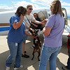 "One of the 9 rescue jobs gets off the plane from Mexico.<br /> The International Fund for Animal Welfare (IFAW) partnered with the Longmont Humane Society to rescue 9 dogs from the Cozumel, Mexico city dump ang bring them to Longmont. For a video  and photo gallery of the dogs' arrival, go to  <a href=""http://www.dailycamera.com"">http://www.dailycamera.com</a>.<br /> Cliff Grassmick / July 14, 2010"