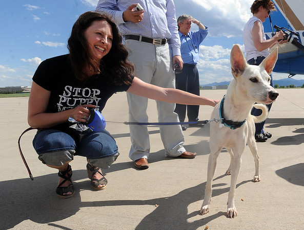 "Dana Carey of Longmont pets her new dog, Alvina, for the first time as dog got off a plane from Mexico.<br /> The International Fund for Animal Welfare (IFAW) partnered with the Longmont Humane Society to rescue 9 dogs from the Cozumel, Mexico city dump ang bring them to Longmont. For a video  and photo gallery of the dogs' arrival, go to  <a href=""http://www.dailycamera.com"">http://www.dailycamera.com</a>.<br /> Cliff Grassmick / July 14, 2010"