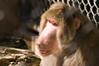 Micke Grove Zoo May 01, 2010 #103-Edit