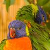 Micke Grove Zoo May 01, 2010 #69