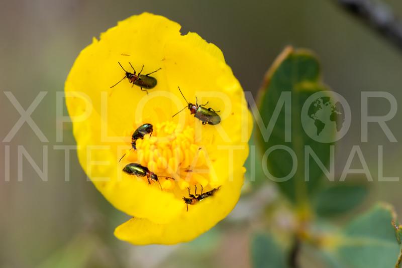 Leaf Beetles - Need ID