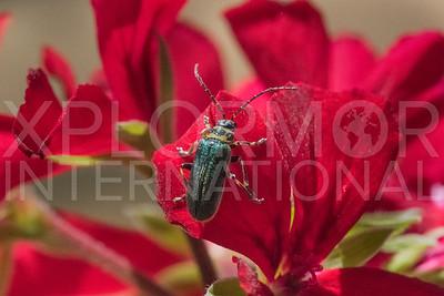 Long-horned Beetle 5