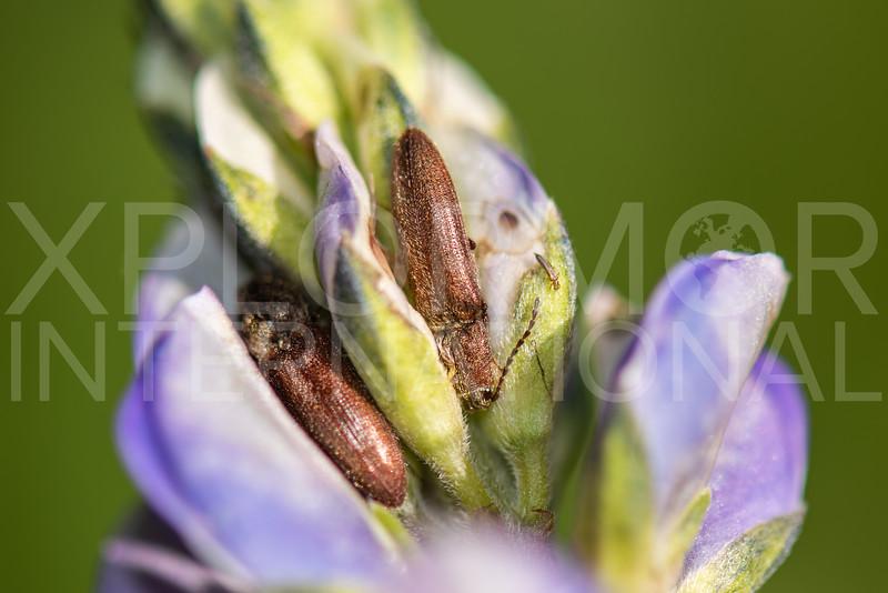 Beetle - Need ID