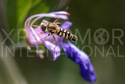 Bird Hover Fly