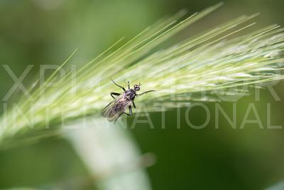 Fly in the Field