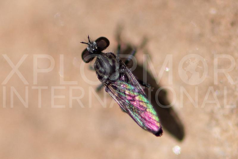 Fly - Need ID